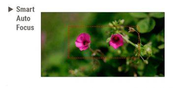Zaļš fons, priekšplānā divi rozā ziedi.